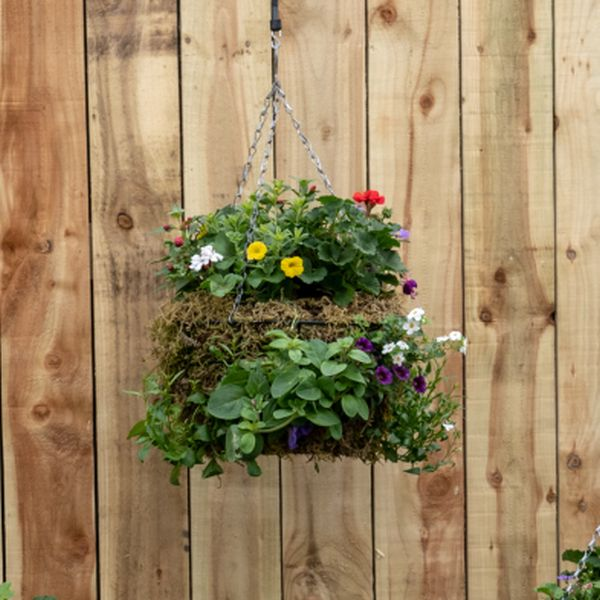 "16"" Traditional Moss Hanging Basket"