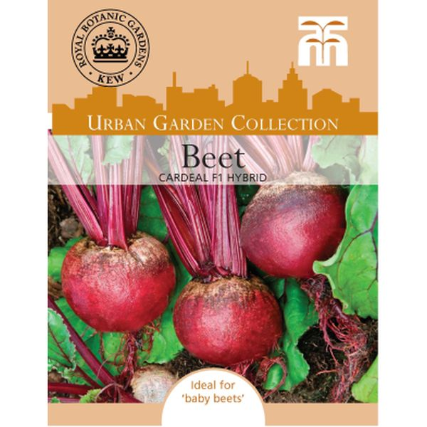 T&M Beet Cardeal F1 Hybrid