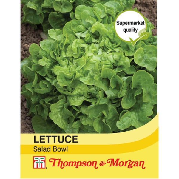 T&M Lettuce Salad Bowl