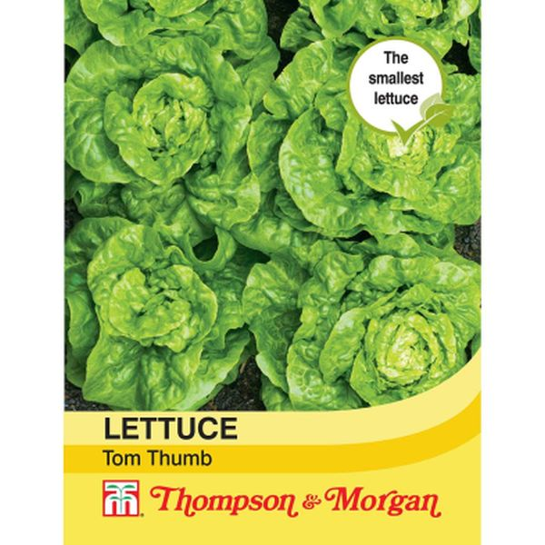 T&M Lettuce Tom Thumb