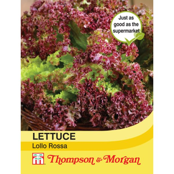 T&M Lettuce Lollo Rossa