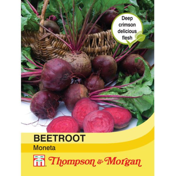T&M Beetroot Moneta