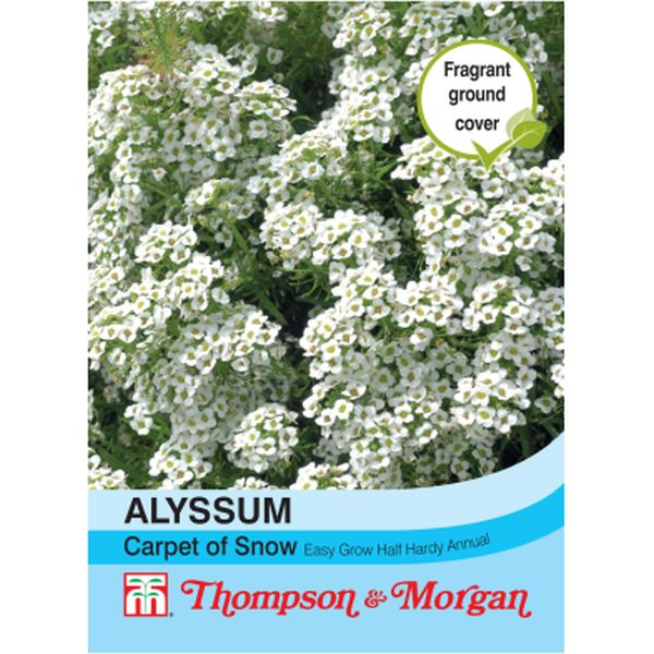 T&M Alyssum Carpet of Snow