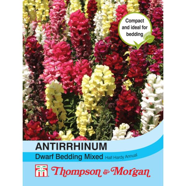 T&M Antirrhinum Dwarf Bedding Mixed