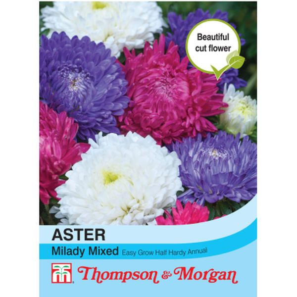 T&M Aster Milady Mixed