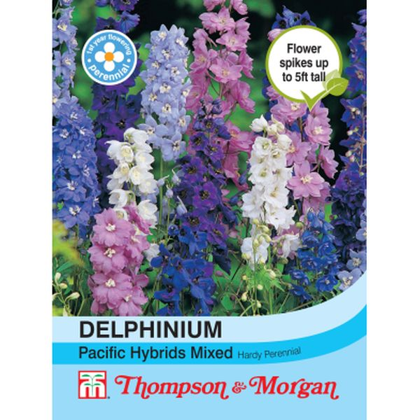 T&M Delphinium Pacific Hybrids Mixed