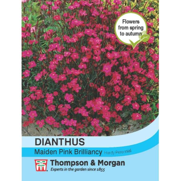 T&M Dianthus Maiden Pink Brilliancy