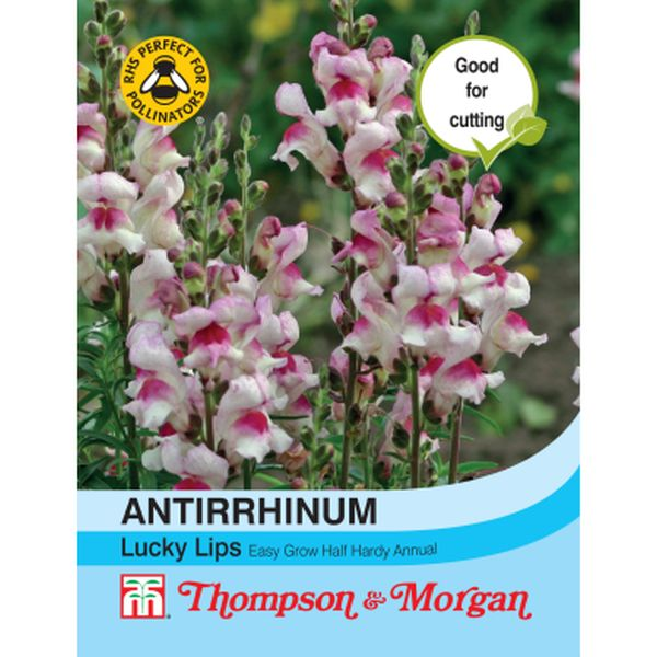 T&M Antirrhinum Lucky Lips