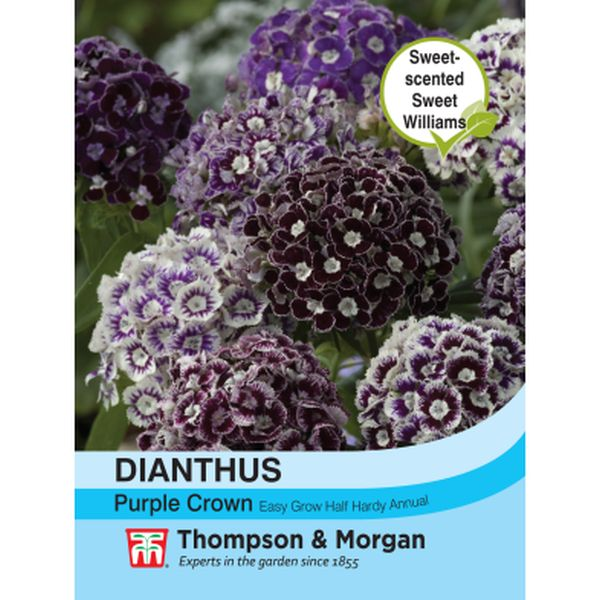 T&M Dianthus Purple Crown