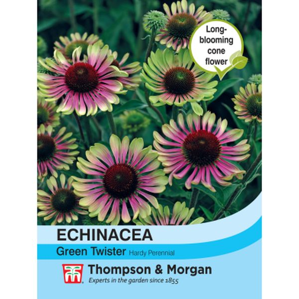 T&M Echinacea Green Twister