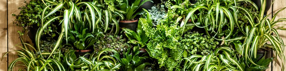 Featured image for 'Living Wall'