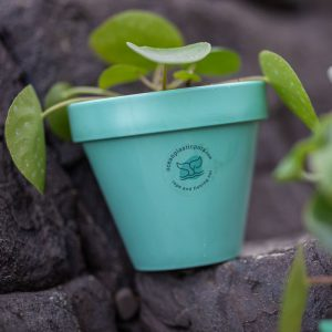 Mint Green Ocean Plastic Pot with plant balancing on rocks on a beach