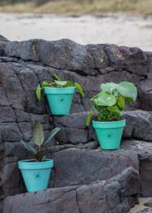 Ocean plastic pots with plants balancing on rocks on a beach